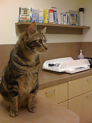 Cat-at-the-Vets
